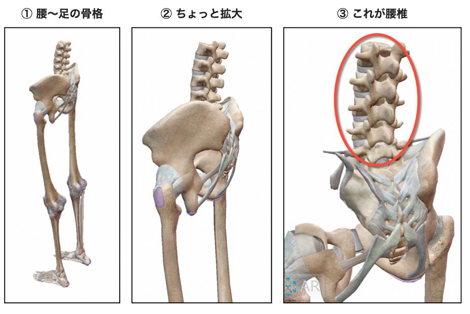 腰下肢の骨格