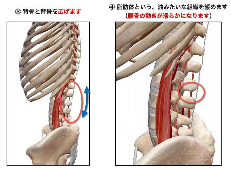 腰椎離開と脂肪体モビ