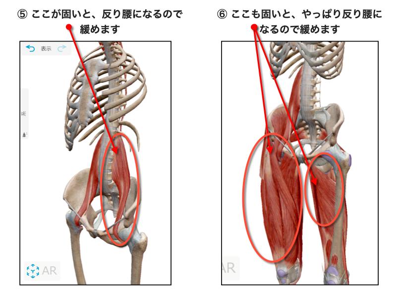 腸腰筋と大腿筋膜張筋、大腿四頭筋、内転筋群をゆるめる