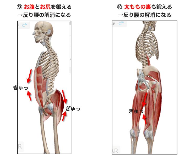 腹筋、腹横筋、臀筋、ハムストリングスを鍛えると骨盤前傾が治る