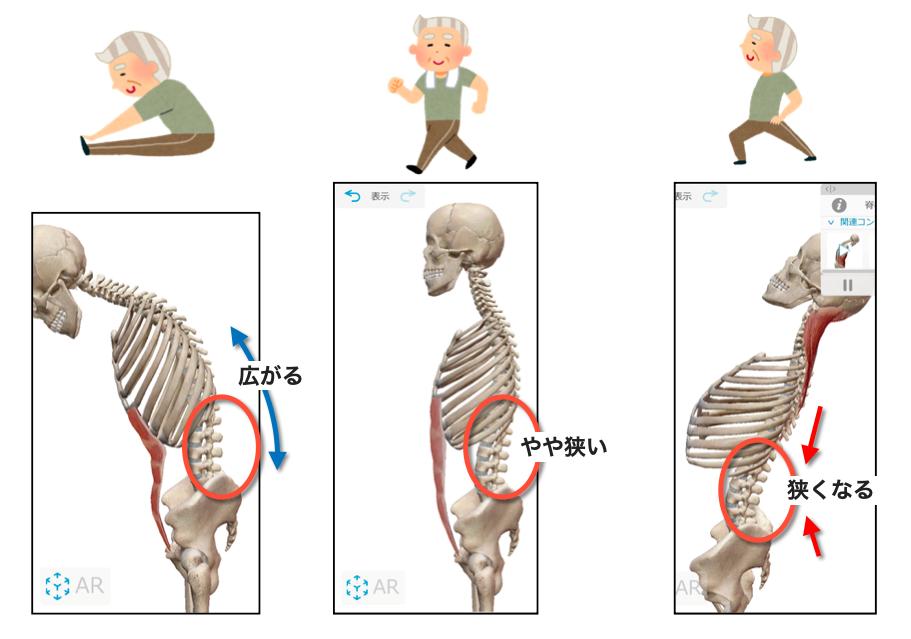 腰椎の動き